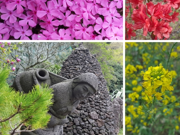 jeju-flowers